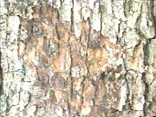 ctree.jpg